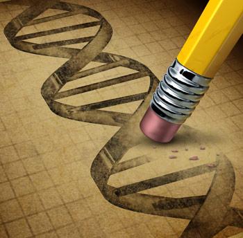 删除单个基因可降低脂肪质量,并将小鼠的寿命延伸20%