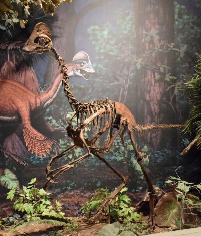 古生物学家宣布发现鸟类恐龙Anzu Wyliei