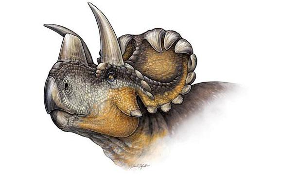 新的有角恐龙物种– Pindicensis Wendiceratops